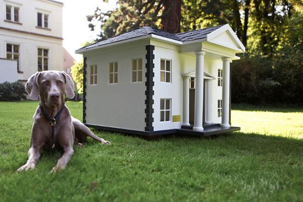 casas perro 15