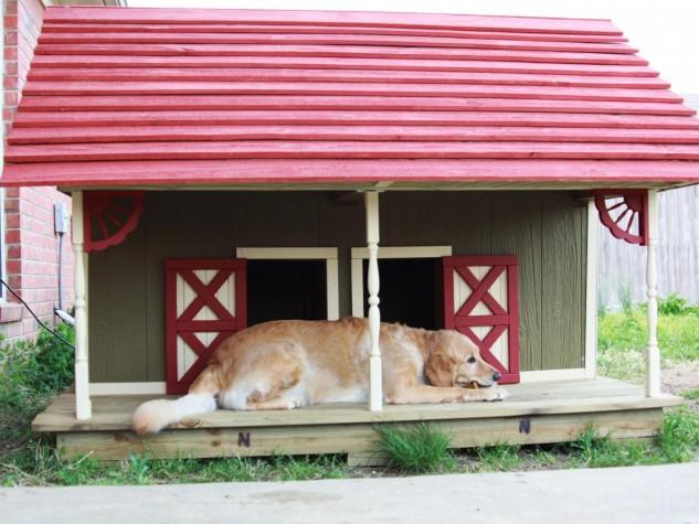 casas perro 16