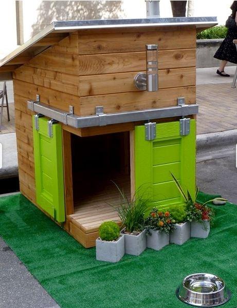 casas perro 2