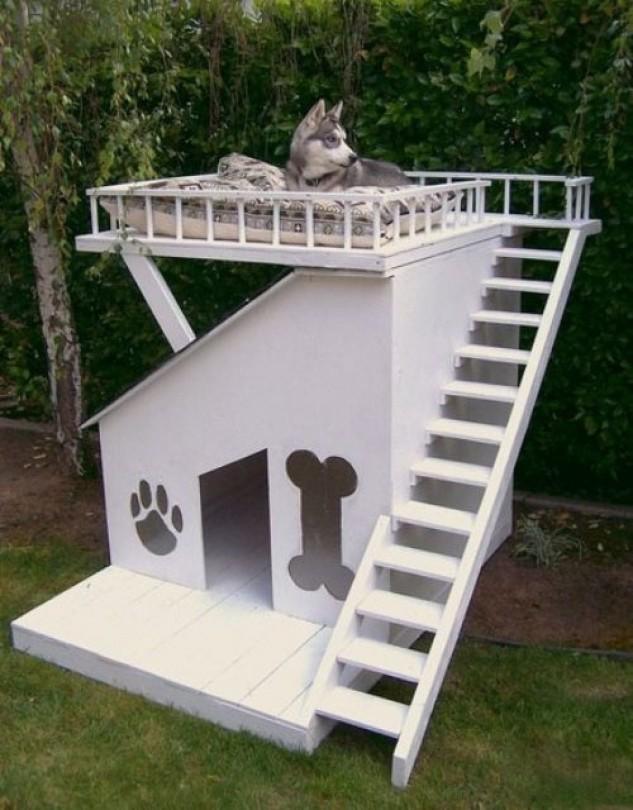 casas perro 4