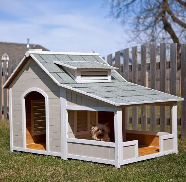 casas perro 5
