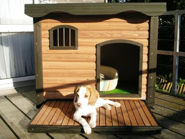 casas perro 6