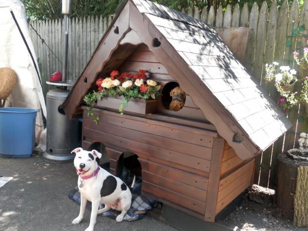 15+ Casas de Perro Totalmente Dulces y Elegantes