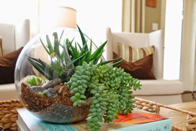 15+ Hermosas Ideas para Decorar con Terrarios