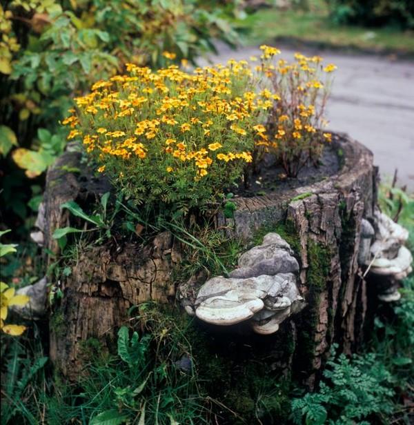 15+ Fantásticas Ideas para Decorar tu Jardín