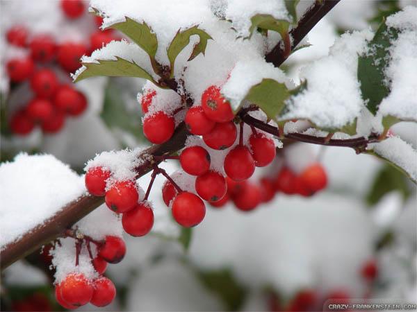 plantas-regalar-navidad