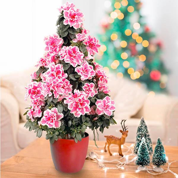maravillosas plantas para regalar en navidad busca las
