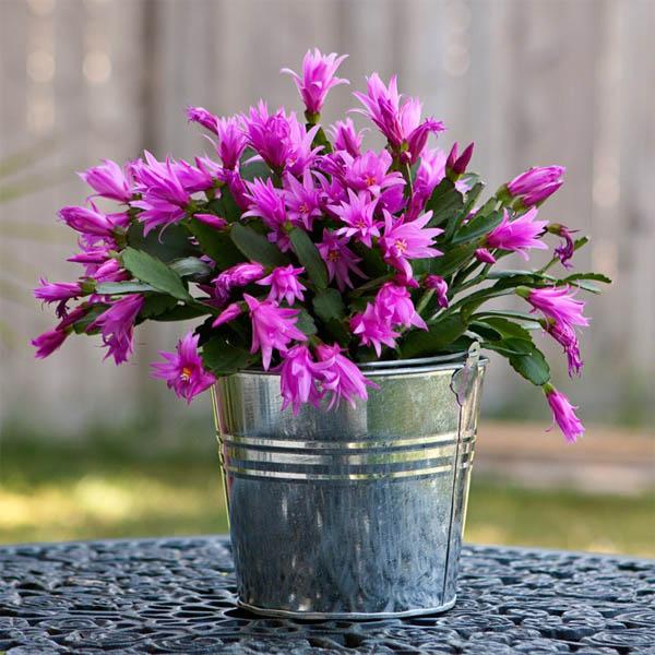 plantas-regalar-navidad-2