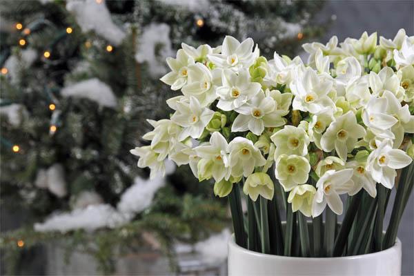 plantas-regalar-navidad-3
