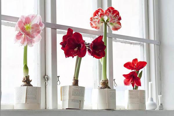 plantas-regalar-navidad-4