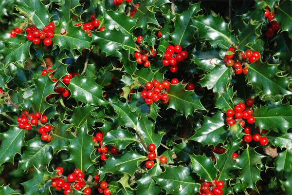 plantas-regalar-navidad-6